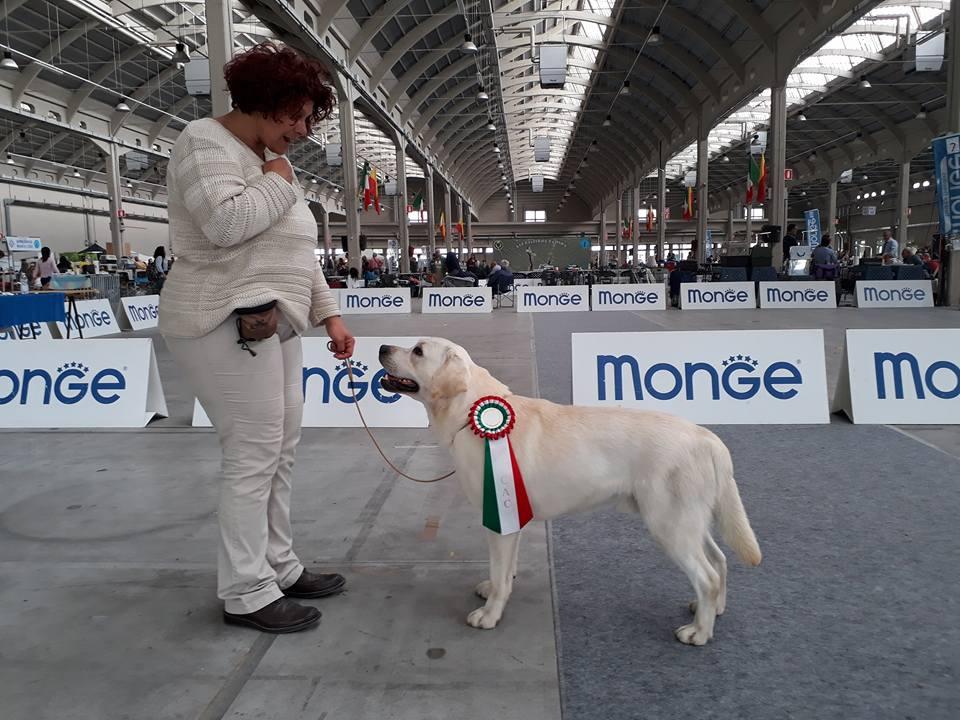 DOPPIA EXPO INTERNAZIONALE ALESSANDRIA/NOVARA 28 E 29 APRILE 2018