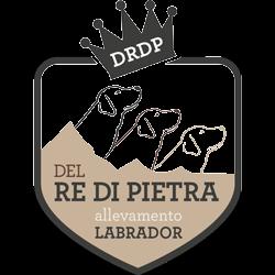 Allevamento cani labrador – Del Re di Pietra